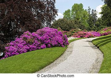 Azaleas flowered in the botanical garden in spring