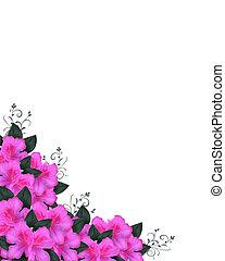 azaleas, invitación, frontera, rosa