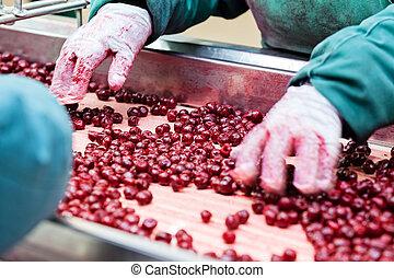 azedo, cerejas, em, processando, máquinas