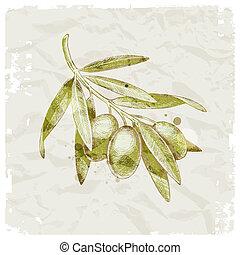 azeitona, desenhado, ramo, mão