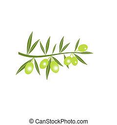 azeitona, verde, silueta, ramo