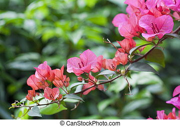 Azelea flowers background