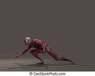 azione, muscolatura, maschio