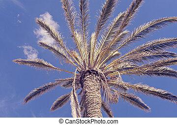 azul, ángulo, cielo, árbol, contra, palma, bajo, vista