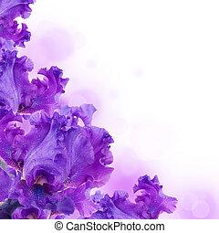 azul, íris, contra, um, grama verde, um, verão, borboleta