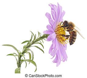 azul, abeja, flor