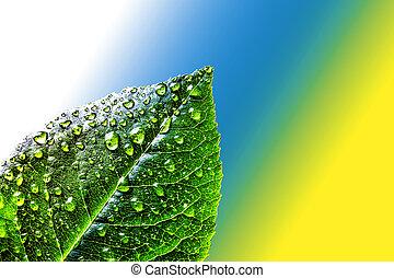 azul, abstracción, hoja, fondo., color, té, resumen, jugoso, rocío, agua, yellow., drops., fondo verde, blanco, fresco, gotas