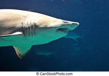 azul, agua, tiburón, profundo