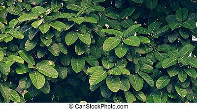 azul, alfiler, hojas, ornata, raya, plano de fondo, calathea