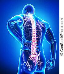 azul, anatomía, macho, dolor, espalda