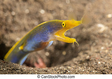 azul, anguila, cinta