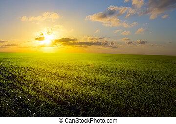 azul, arte, primavera, campo céu, amanhecer