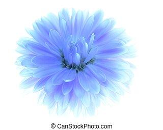 azul, aster