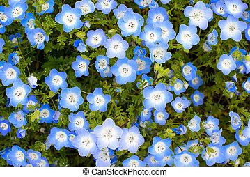 azul bebê, olhos, flor, fundo