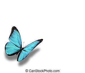 azul, blanco, mariposa, aislado