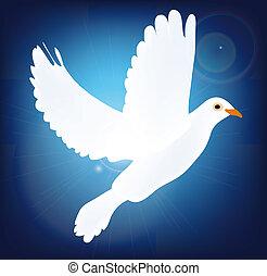 azul, blanco, paloma, plano de fondo