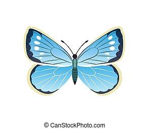 azul, borboleta, ilustração, morpho, vetorial, peleides