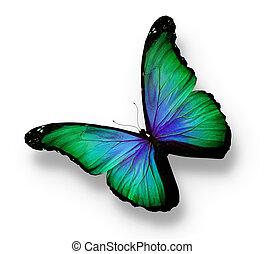 azul, borboleta, isolado, verde, branca