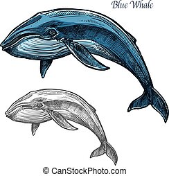 azul, bosquejo, mar, aislado, diseño, animal, ballena