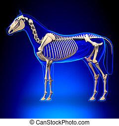 azul, caballo, esqueleto, -, anatomía, plano de fondo, equus