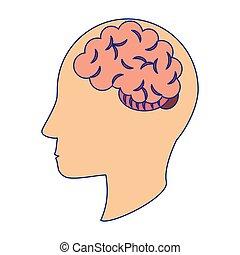 azul, cabeça, silueta, símbolo, linhas, cérebro, human
