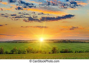 azul, campo, milho, céu, amanhecer