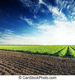 azul, campos arados, céu, profundo, verde, pôr do sol, tomates