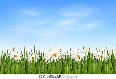 azul, capim, sky., natureza, vetorial, experiência verde, flores