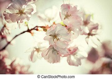 azul, cereza, foto, árbol, vendimia, flores, cielo