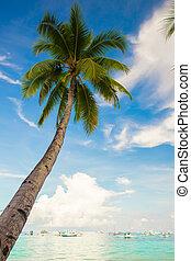 azul, coco, cielo, árbol, palma, plano de fondo, playa,...