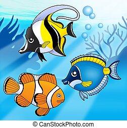 azul, coral, pez, mar, colección
