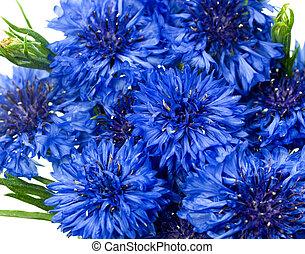 azul, cornflower, botão, cyanus, solteiros, centaurea, ou
