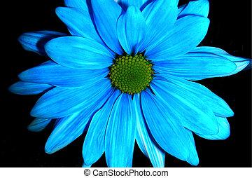 azul, daisy-2