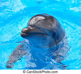 azul, delfín, water.