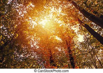 azul, dourado, sol, parque, cena, árvores, outono, através, brilhar, céu