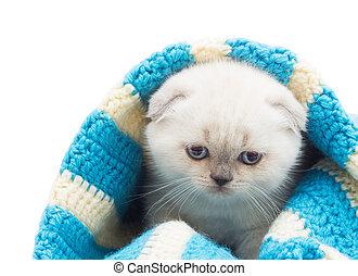 azul, engraçado, cobertor, gatinho