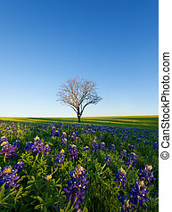 azul, ennis, tejas, campo, gorra