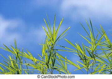 azul, espaço, folhas, céu, fundo, fresco, bambu