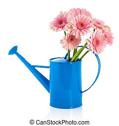 azul, flores côr-de-rosa, lata molhando