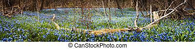 azul, flores mola, floresta, tapete