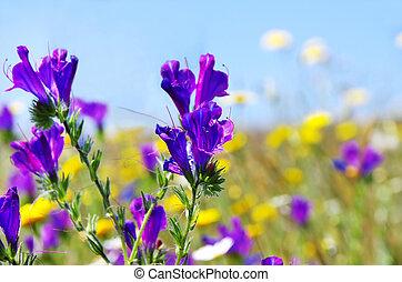 azul, flores salvajes
