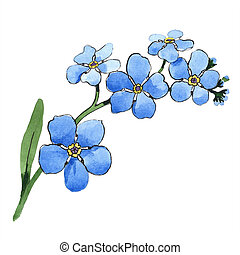 azul, flower., aislado, ilustración, acuarela, floral, nomeolvides, botánico, element.