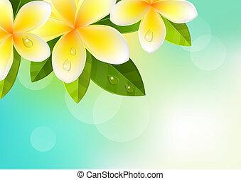 azul, frangipani, flores, plano de fondo, trópico