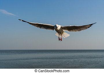 azul, gaivota voa, céu