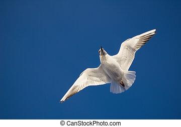 azul, gaivota, voando, céu, fundo