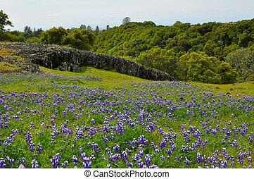 azul, gorra, flores, pradera, tejas