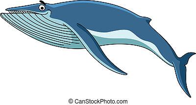 azul, grande, ballena, baleen