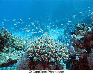 azul, grande, tke, arrecife, coral, agua, profundidad, fondo...