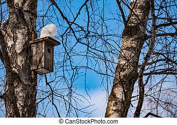 azul, inverno, céu, contra, árvores, vidoeiro, birdhouse