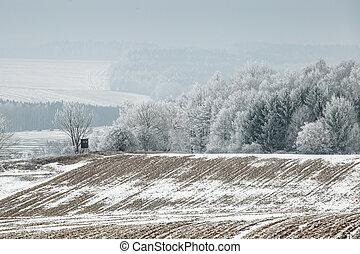 azul, inverno, congelado, céu, árvores, campo, paisagem